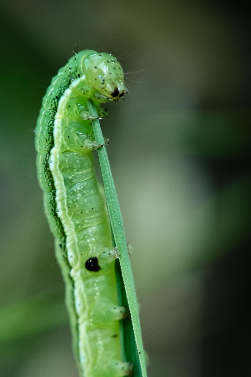 Ein Wurm in der Natur Macro fotografiert