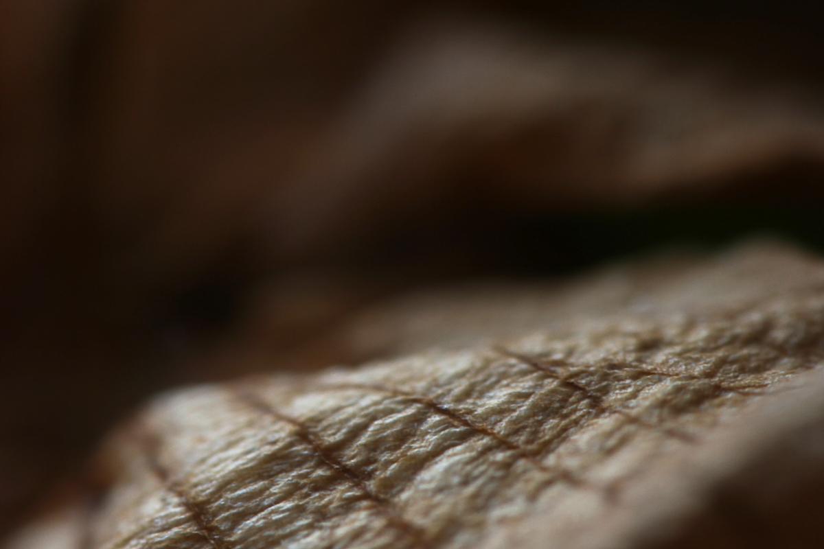 Macro trocken Blätter